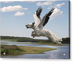 Bird Dog Acrylic Print