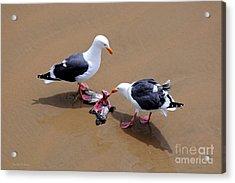 Bird Eats Bird Acrylic Print