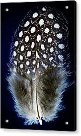 Bird Feather Acrylic Print