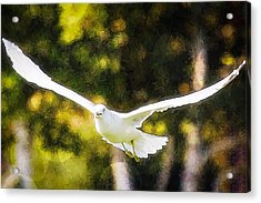 Bird Fly With Colors Acrylic Print by Saibal Ghosh
