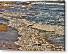 Acrylic Print featuring the pyrography Bird Gliding Over Seashore by Julis Simo
