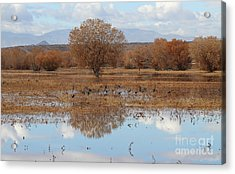 Acrylic Print featuring the photograph Bird Heaven by Ruth Jolly