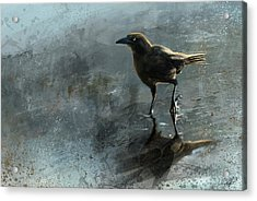 Bird In A Puddle Acrylic Print