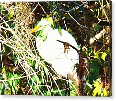 Bird In Mangroves Acrylic Print by Van Ness