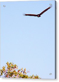 Bird In Pursuit Acrylic Print by Van Ness