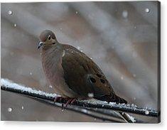 Bird In Snow - Animal - 011311 Acrylic Print by DC Photographer