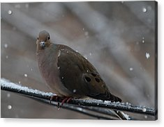 Bird In Snow - Animal - 011312 Acrylic Print by DC Photographer