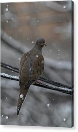 Bird In Snow - Animal - 01134 Acrylic Print by DC Photographer