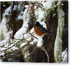 Bird In Snow Acrylic Print