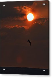 Bird In Sunset Acrylic Print by Tony Reddington