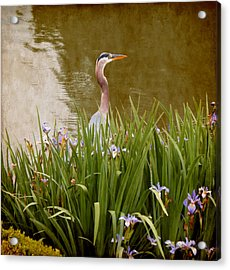 Bird In The Water Acrylic Print by Milena Ilieva