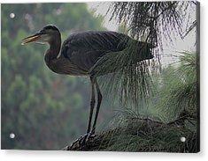 Bird In Tree Acrylic Print