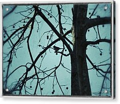 Acrylic Print featuring the photograph Bird In Tree by Tara Potts