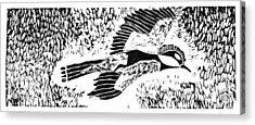 Bird Acrylic Print by Keiskamma art project