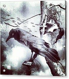 #bird Looking For #birdbath . #surreal Acrylic Print