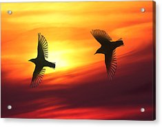 Bird Lovers Acrylic Print