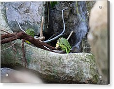 Bird - National Aquarium In Baltimore Md - 12126 Acrylic Print by DC Photographer