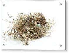 Bird Nest 1 Acrylic Print