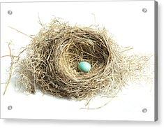 Bird Nest 2 Acrylic Print