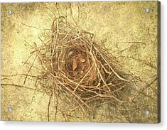 Bird Nest II Acrylic Print by Suzanne Powers
