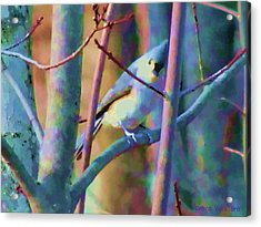 Bird Of Another Color Acrylic Print