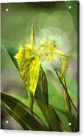 Bird Of Iris Acrylic Print by Adria Trail