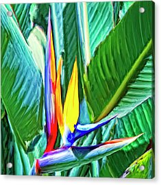 Bird Of Paradise Acrylic Print by Dominic Piperata