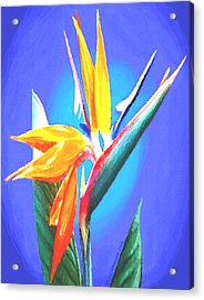 Acrylic Print featuring the painting Bird Of Paradise Flower by Sophia Schmierer