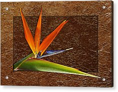 Bird Of Paradise Gold Leaf Acrylic Print
