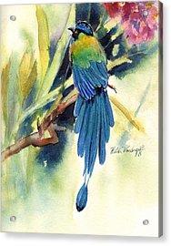 Bird Of Paradise Acrylic Print by Hilda Vandergriff