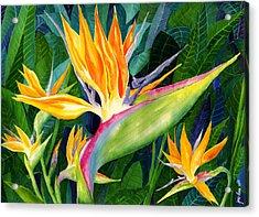 Bird-of-paradise Acrylic Print