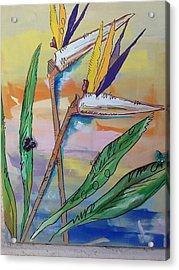 Bird Of Paradise Acrylic Print by Karen Carnow
