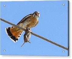 Bird Of Prey Acrylic Print by Jill Bell