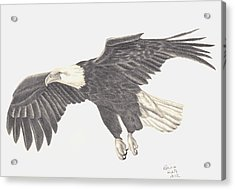 Acrylic Print featuring the drawing Bird Of Prey by Patricia Hiltz