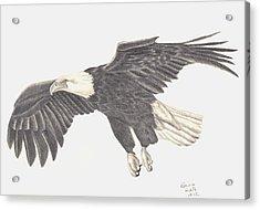 Bird Of Prey Acrylic Print by Patricia Hiltz