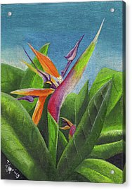 Acrylic Print featuring the painting Hawaiian Bird Of Paradise by Thomas J Herring