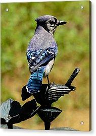 Bird On A Bird Acrylic Print