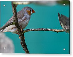 Acrylic Print featuring the photograph Bird On A Branch by John Hoey