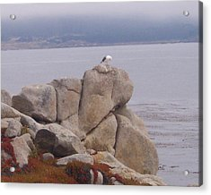 Bird On A Rock Acrylic Print by Pharris Art