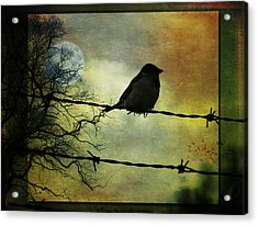Bird On A Wire Acrylic Print by Marie  Gale