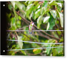 Acrylic Print featuring the photograph Bird On A Wire by Nick Kirby
