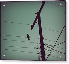Bird On A Wire Acrylic Print