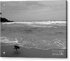 Bird On Kovalam Beach Acrylic Print