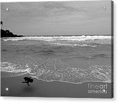 Bird On Kovalam Beach Acrylic Print by Mini Arora