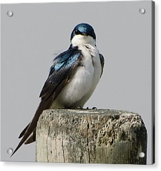 Bird On Post Acrylic Print