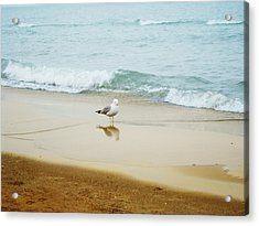 Bird On The Beach Acrylic Print by Milena Ilieva