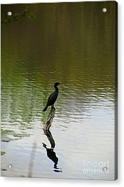 Bird On The Lake Acrylic Print by Avis  Noelle