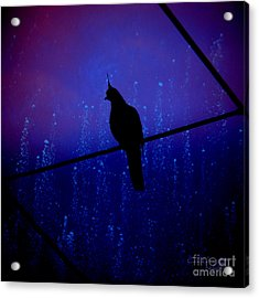 Bird On The Wire ... Acrylic Print