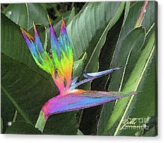 Acrylic Print featuring the photograph Bird Ow  Paradise by Suzette Kallen