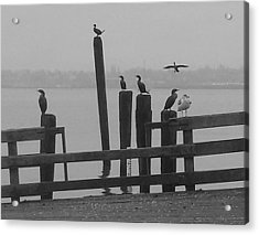 Bird Party In Black And White Acrylic Print by Karen Molenaar Terrell